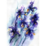 Nicky Hunter, Vibrant Iris